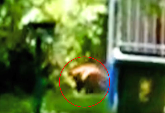 The animal appears to have dark colouring on its legs