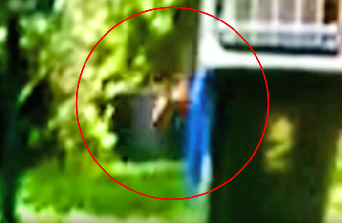 The head does look kangaroo like in the frame